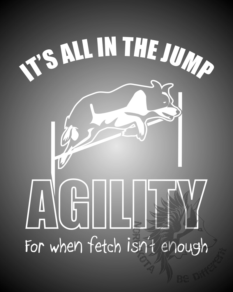Agility Collie