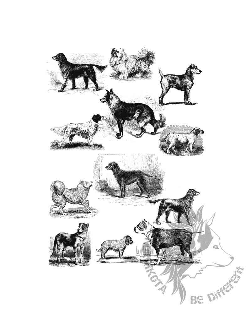 Vintage Dogs HD